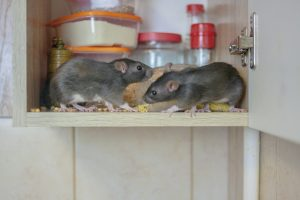 Chassez les souris de la maison