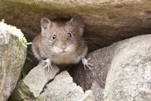 Faites sortir les souris de chez vous